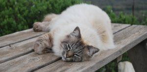 our domestic cat: Rafel